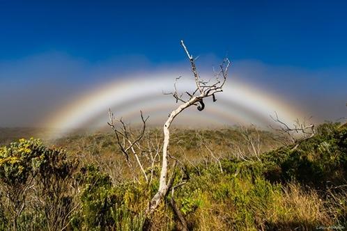 L'image contient peut-être: ciel, plante, plein air et nature