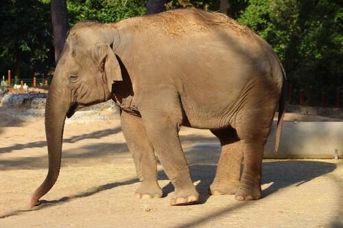 Elephants au zoo