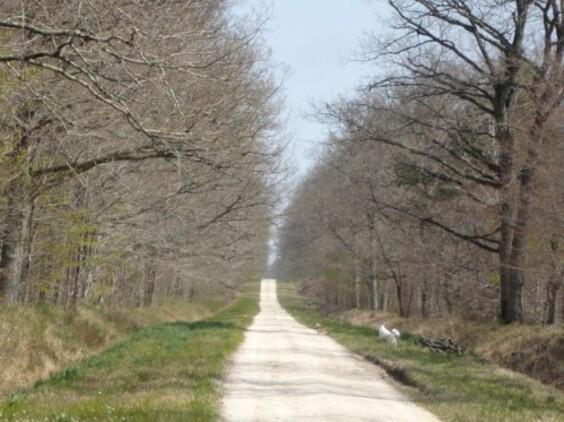 Promenade en forêt 1