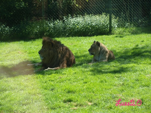 Zoo de la Bourbansais <3