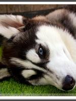 Mishka (4 mois)
