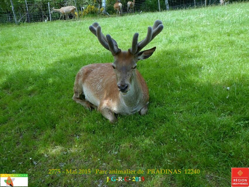 Parc animalier de PRADINAS 12   24-05-2015    3/7  D 05/04/2016