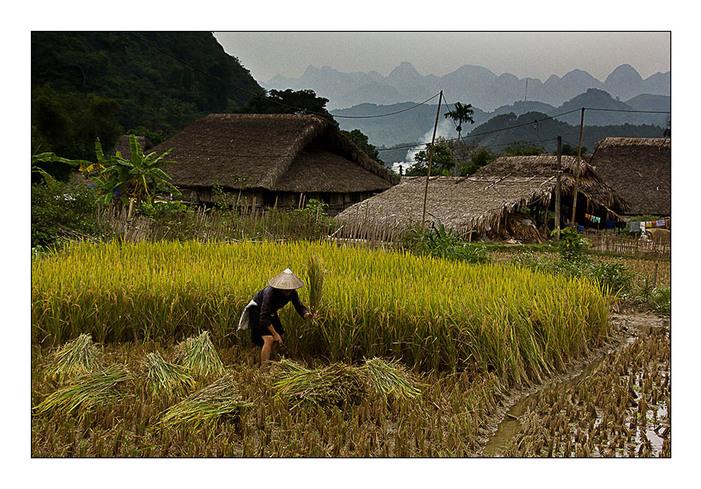 Une rizière par jour 23