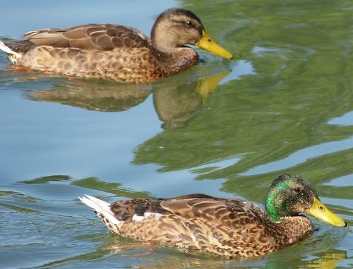Randonnée au Parc de Sceaux, jeudi 17 juillet 2014