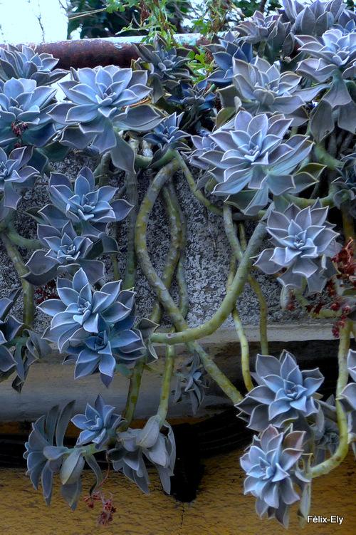 Des plantes au balcon !