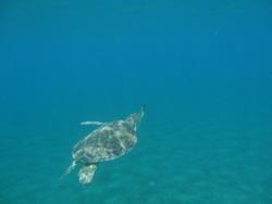 Malendure, les tortues!