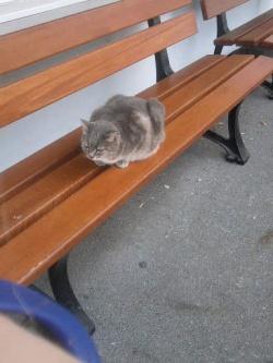 chat gris sur un banc