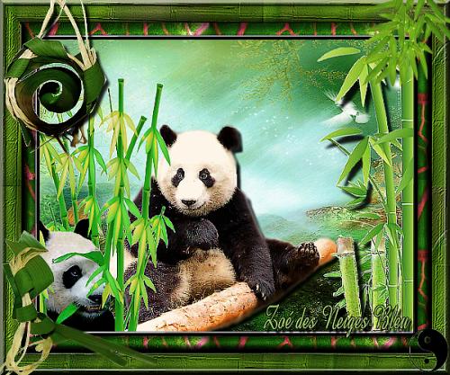 défi panda