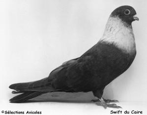 Swift du Caire