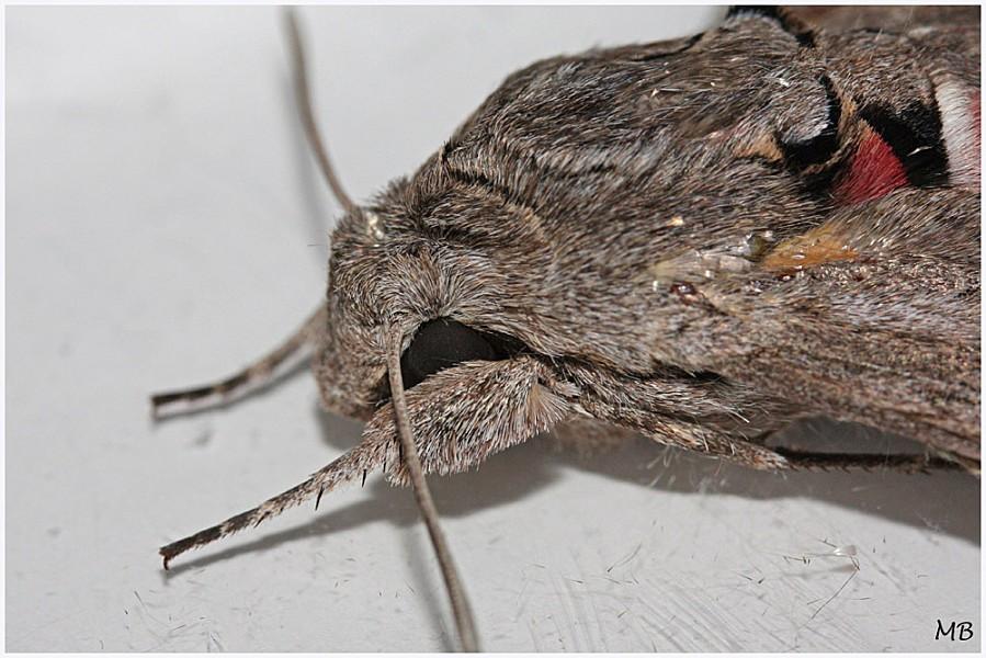 Insectes-04-6880.jpg
