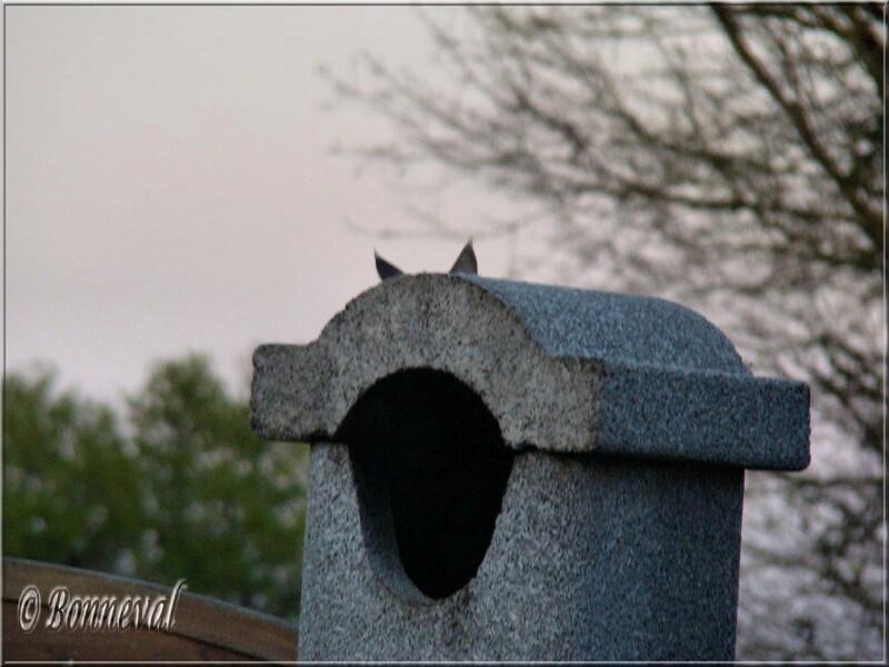 Memphis et le chat Rochefort Charente-Maritime