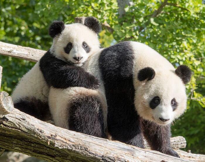 Maman et moi - zoo de Beauval