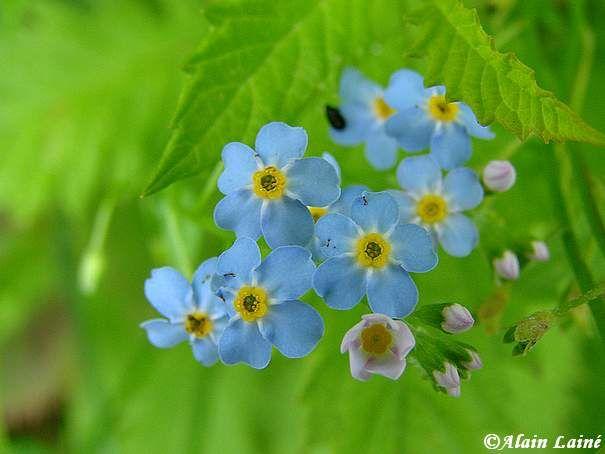 Fleur_10Juil08_6