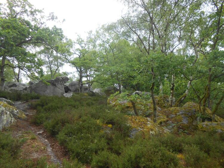 Aisne-les bruyères du Tardenois #2