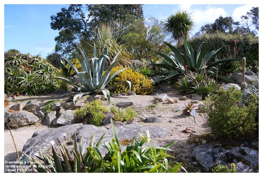 Jardin exotique de Roscoff - 29 -