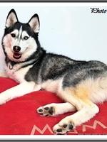 Mishka (2 ans)