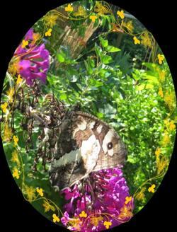 Au Jardin et avec la lune du 1er au 15 Juillet