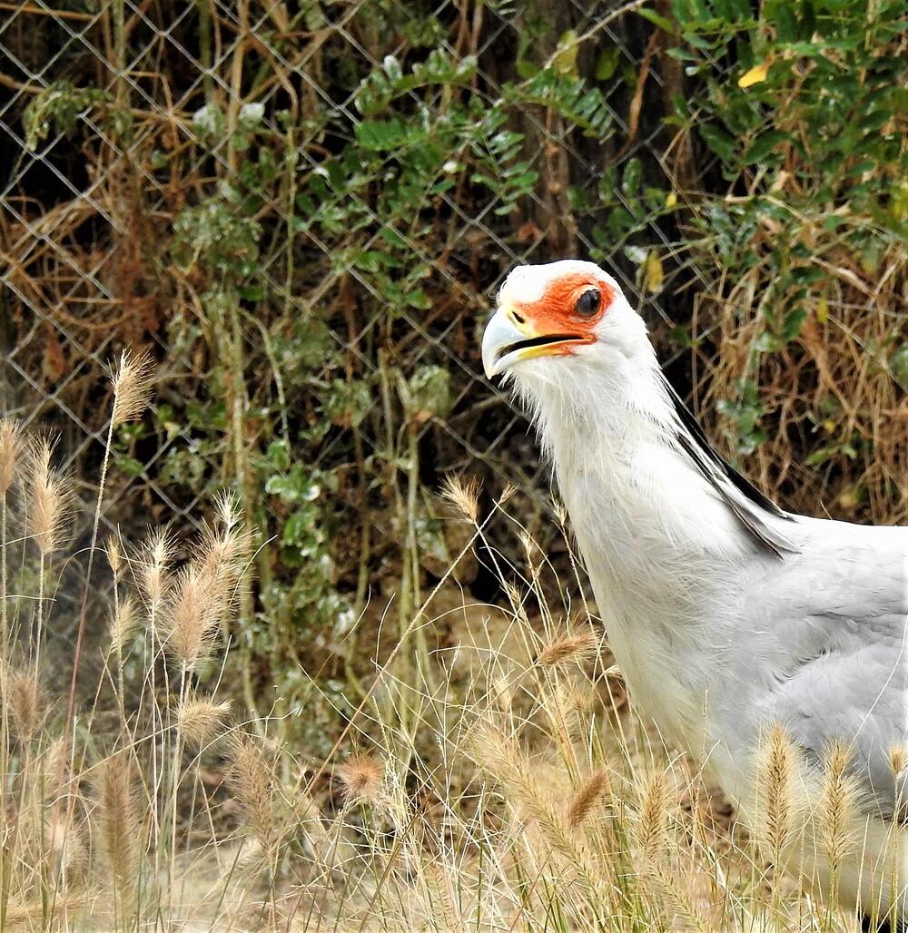 Portaits d' Oiseaux au Parc de Villars des Dombes