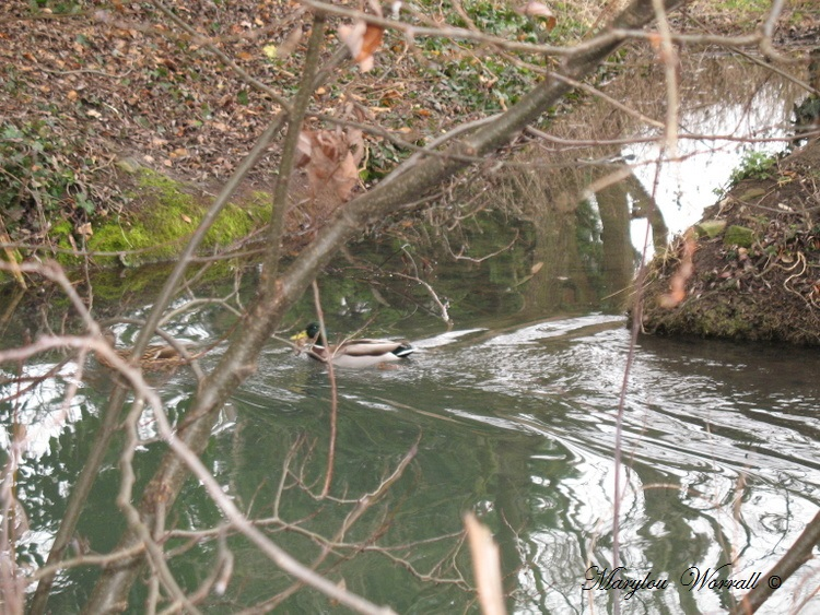 La faune du bord de l'eau