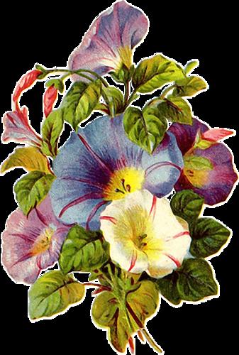 Fleurs Vintage Serie 4 Le Manege A Tubes De Catetoile