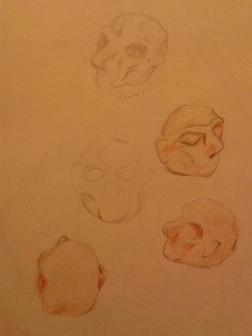 Crâne de terre
