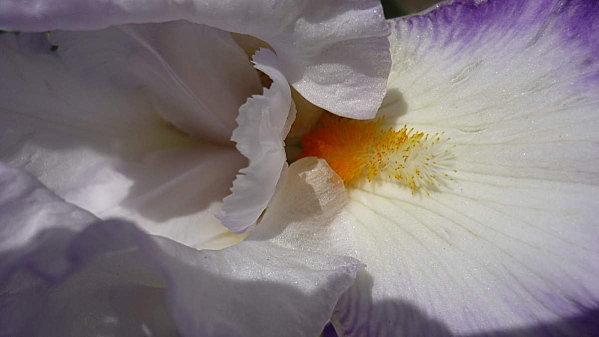 Parc-Floral-147.JPG