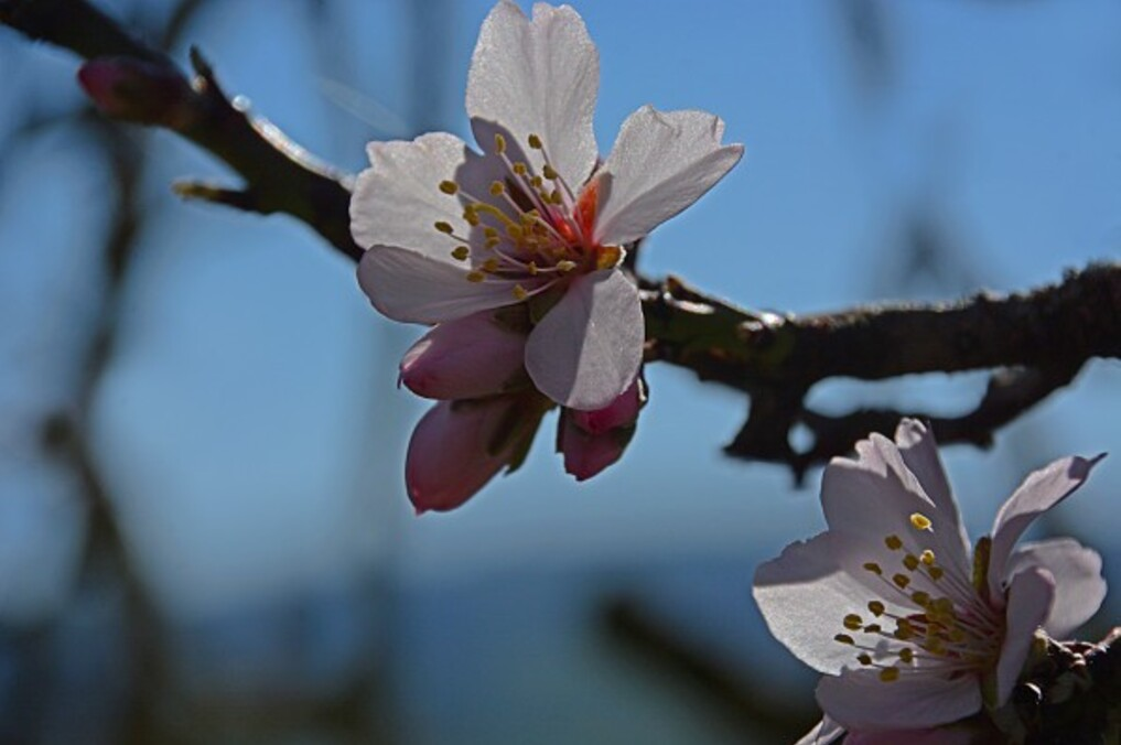Fleurs-12-9809_modifie-1.jpg