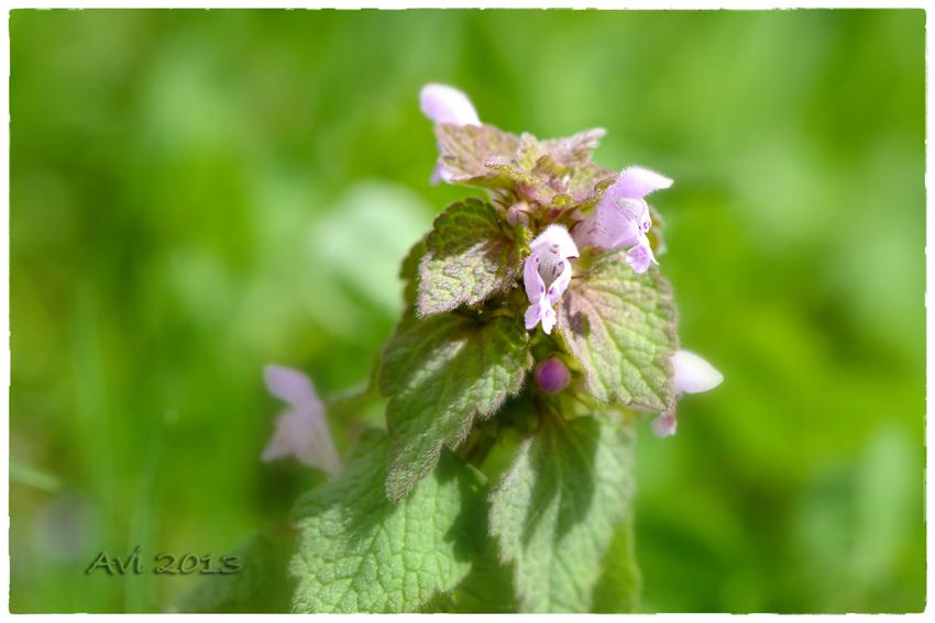 Ces petites fleurs toutes simples qui ornent nos fossés