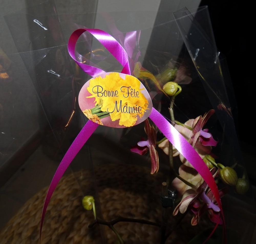 Une orchidée pour la fête des mamies...