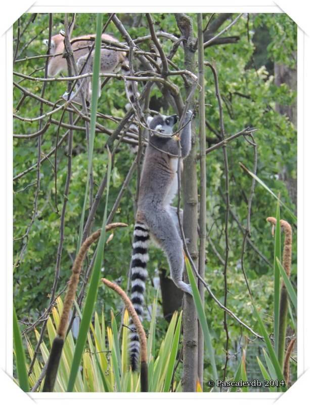 Zoo du Bassin d'Arcachon à La Teste de Buch - 13/20