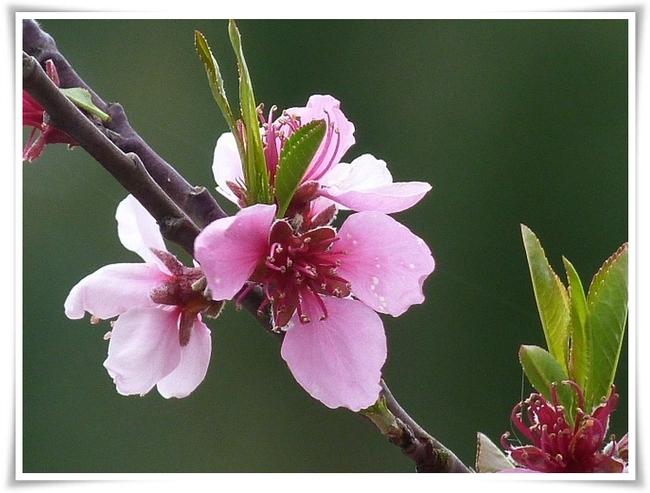 Floraisons éphémères