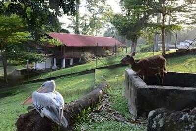 Sur les traces du docteur Schweitzer au Gabon
