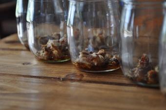 Yaourts au sirop d'érable et noix de pécan caramélisées