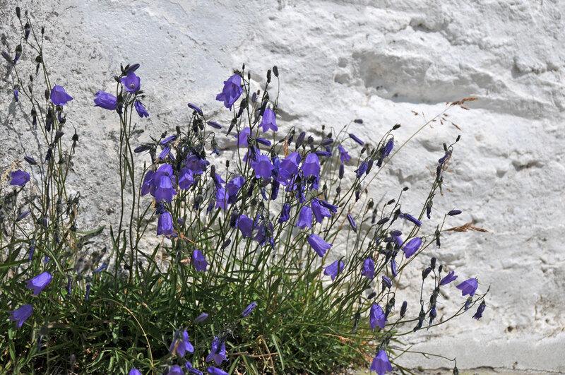 Randonnée au Val Ferret (9)