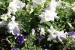 Faune & Flore aux hortillonnages de Camon