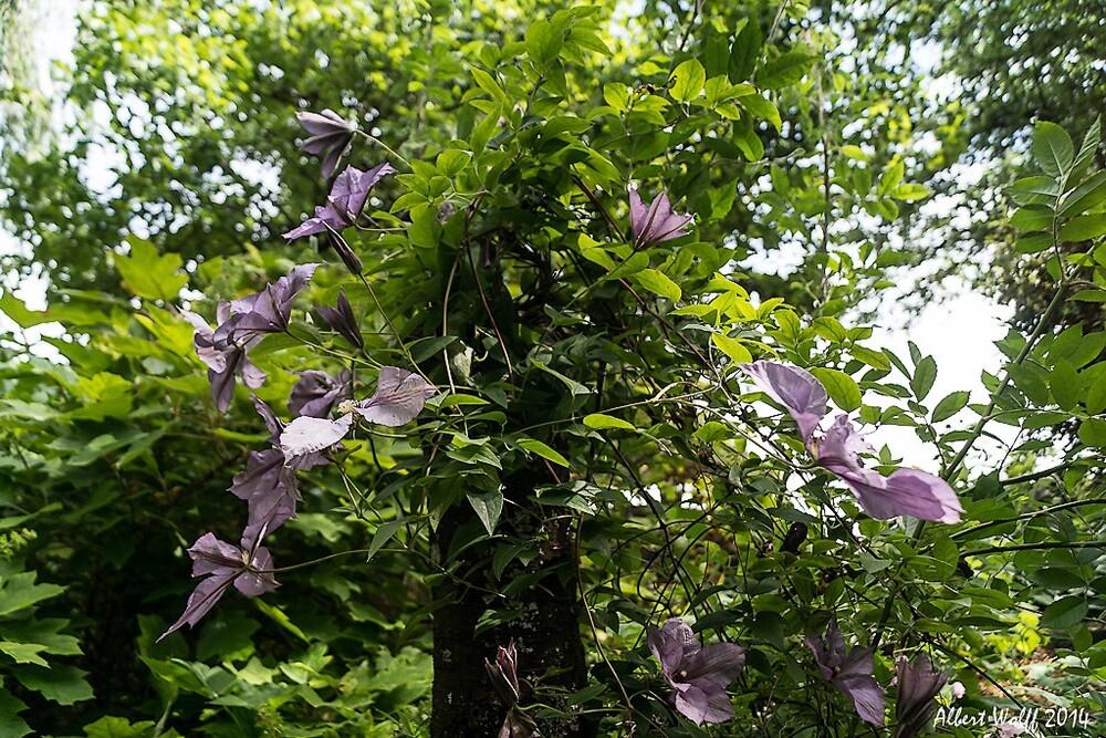 Sur la route des fleurs  - La Chaux - 71
