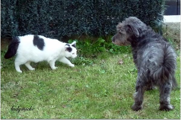 Méfiance ! chien et chats.