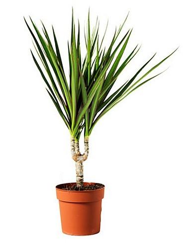 plante interieur longue tige