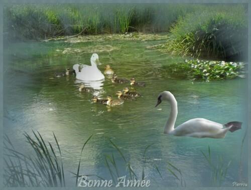 Dame Cane et ses petits