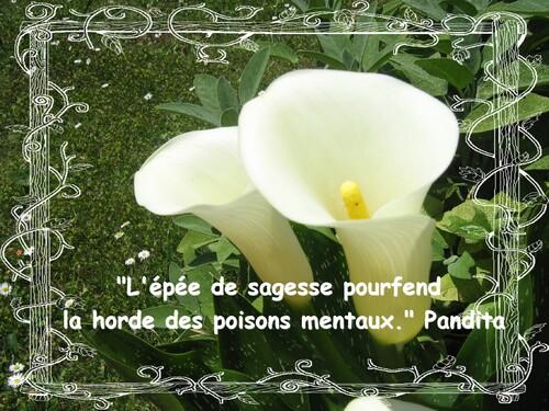Citation sur la sagesse de Pandita: sage tibétain du XIII ème siècle ap.JC