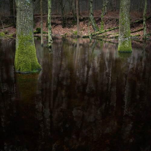 Ellie Davis sublime les paysages