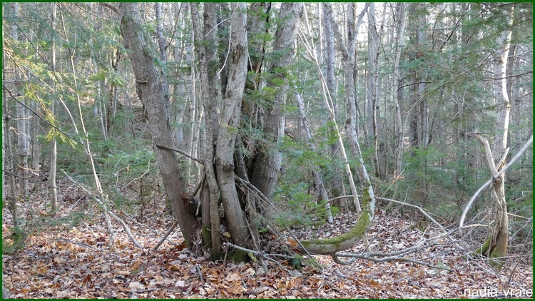 Une après-midi en forêt. (2 de 5)