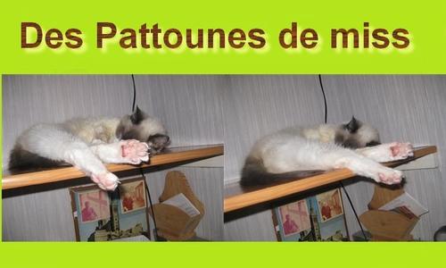 Pattounes