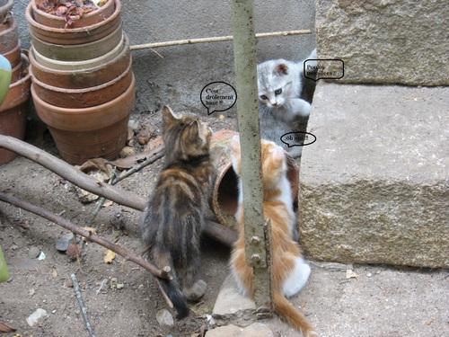 Drôles de chats !