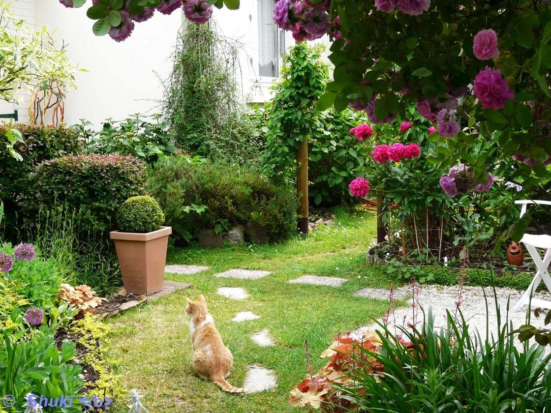 le jardin en juin 2013