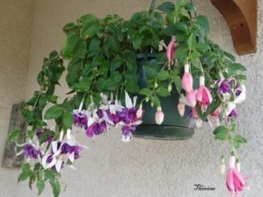 Fleurs d'automne (40)