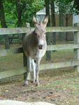 Photo d'un âne - Anne, c'est moi !