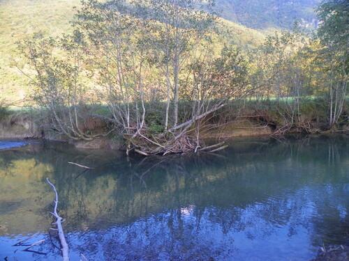 La réserve du Bout du Lac ( 2 )
