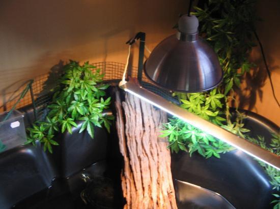 am nagement d 39 un bassin int rieur pour tortue d 39 eau le monde des tortues. Black Bedroom Furniture Sets. Home Design Ideas