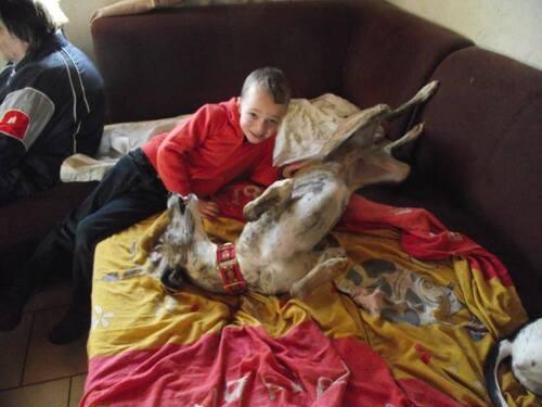 Zara et Chino, deux anges à l'adoption en Belgique